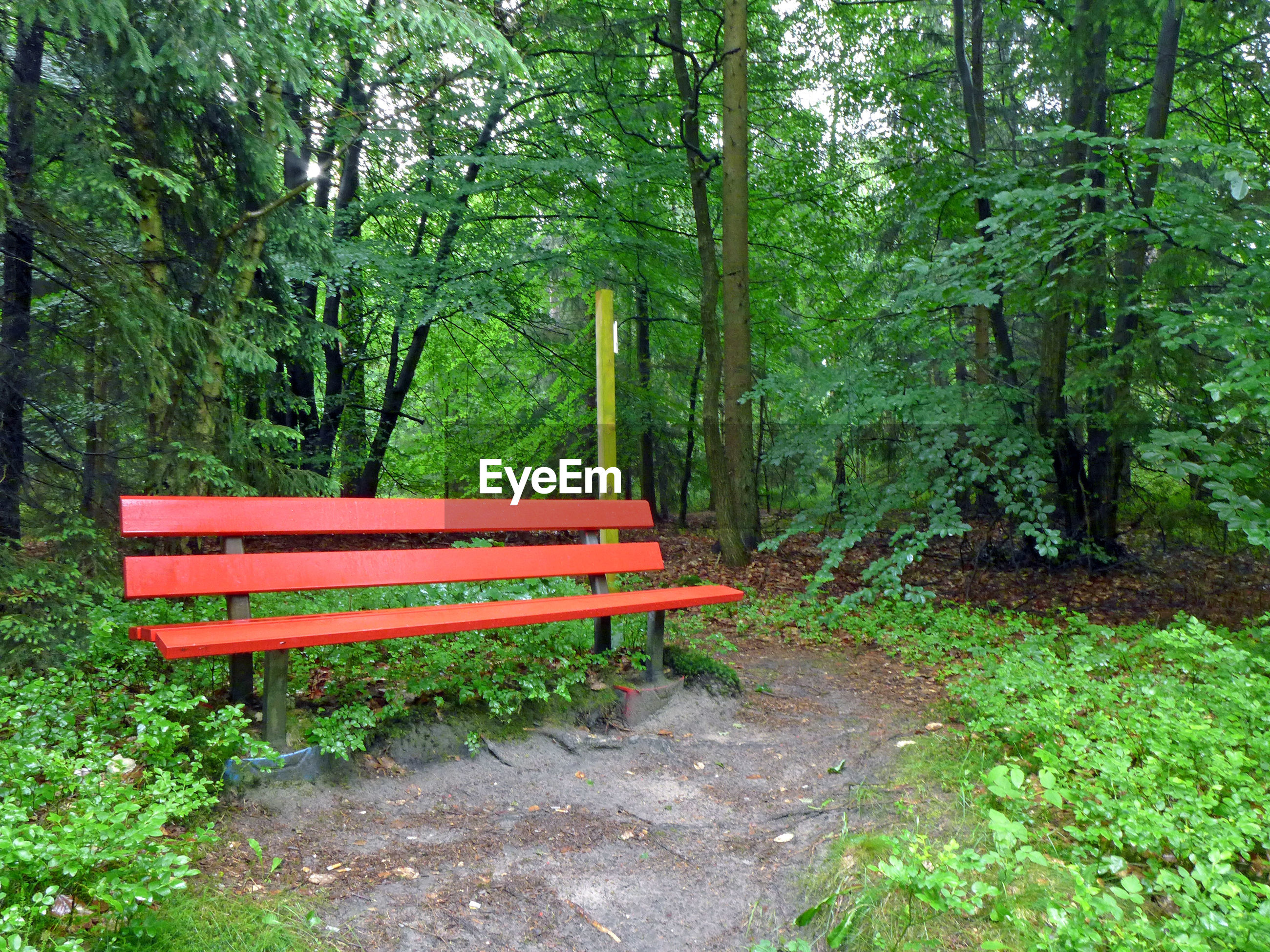 Empty bench against trees in forest