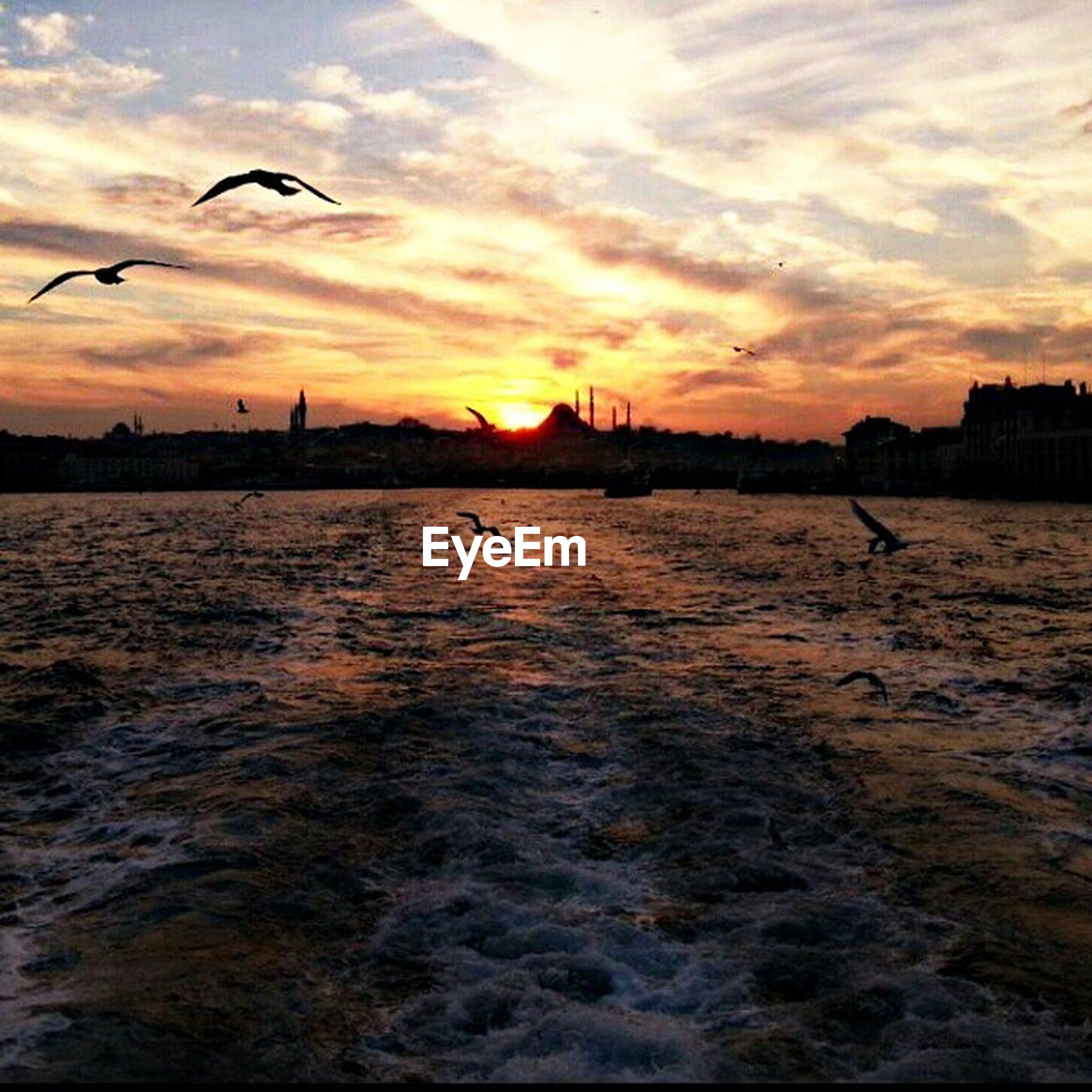 sunset, bird, water, sky, animal themes, flying, animals in the wild, wildlife, silhouette, orange color, waterfront, scenics, sea, cloud - sky, beauty in nature, rippled, reflection, one animal, nature, tranquil scene