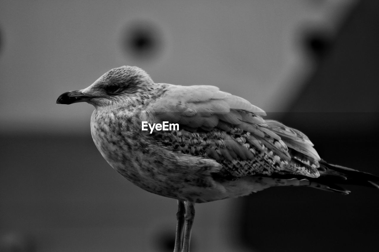 bird, one animal, animal themes, animals in the wild, focus on foreground, animal wildlife, close-up, no people, outdoors, nature, day, perching