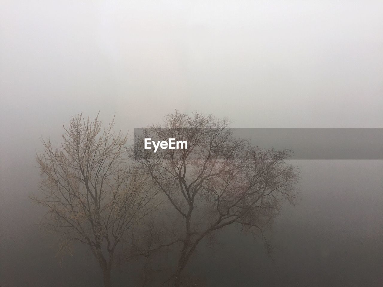 fog, nature, bare tree, tree, tranquility, beauty in nature, mist, outdoors, no people, low angle view, tranquil scene, hazy, branch, sky, scenics, day, landscape