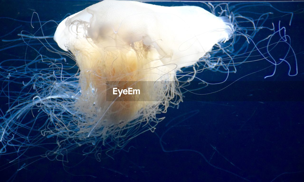 underwater, sea life, swimming, jellyfish, close-up, water, floating in water, undersea, smooth, sea, no people, animal themes, nature, beauty in nature, outdoors, day