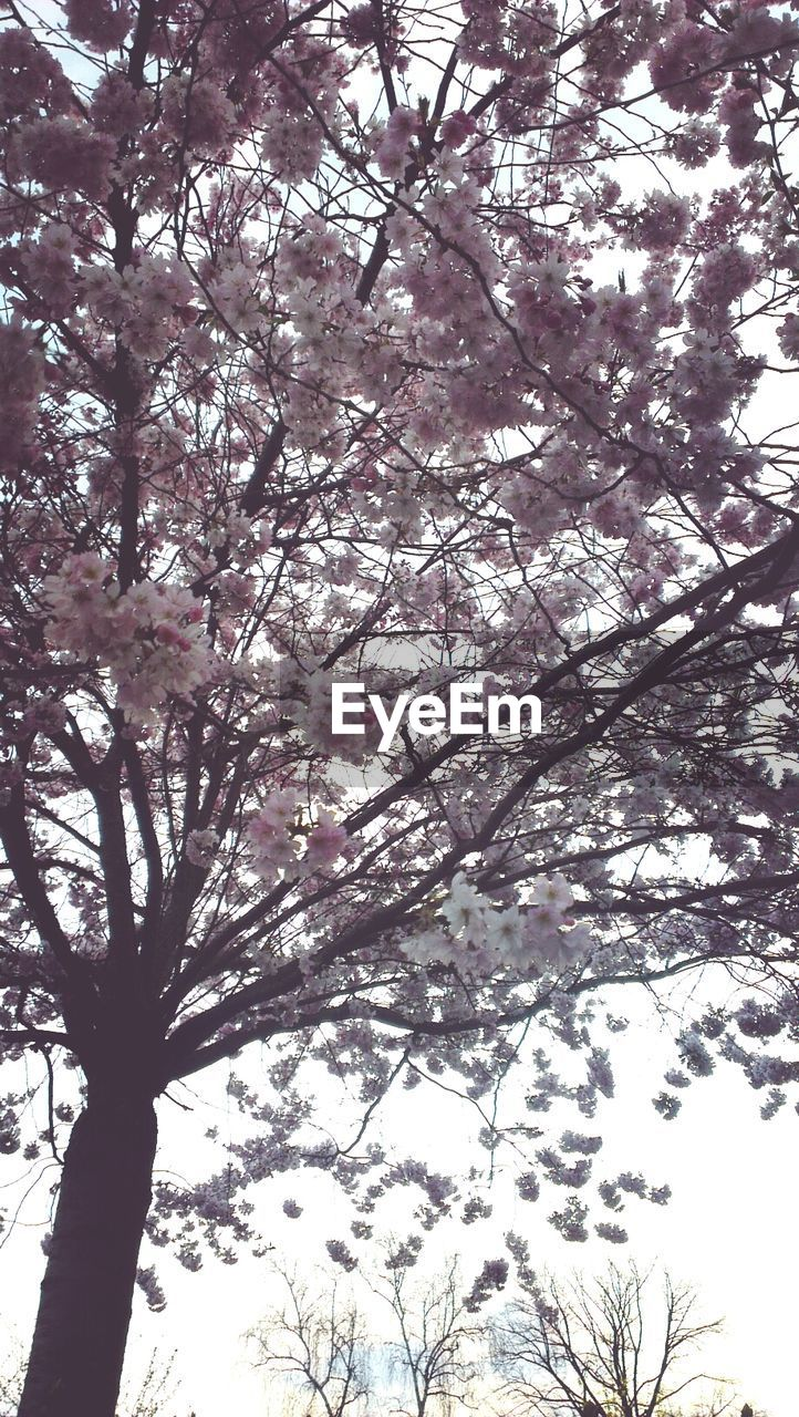tree, low angle view, branch, beauty in nature, nature, growth, blossom, day, flower, springtime, no people, outdoors, tranquility, sky, backgrounds, scenics, tree trunk, fragility, freshness