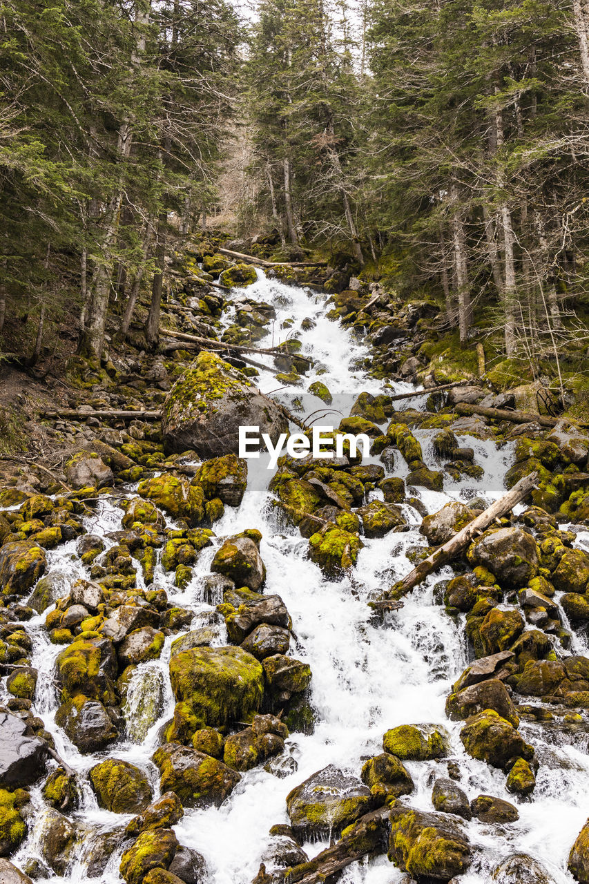 tree, forest, beauty in nature, water, land, plant, no people, rock, scenics - nature, flowing water, nature, motion, rock - object, solid, day, non-urban scene, blurred motion, river, long exposure, outdoors, flowing, stream - flowing water, woodland