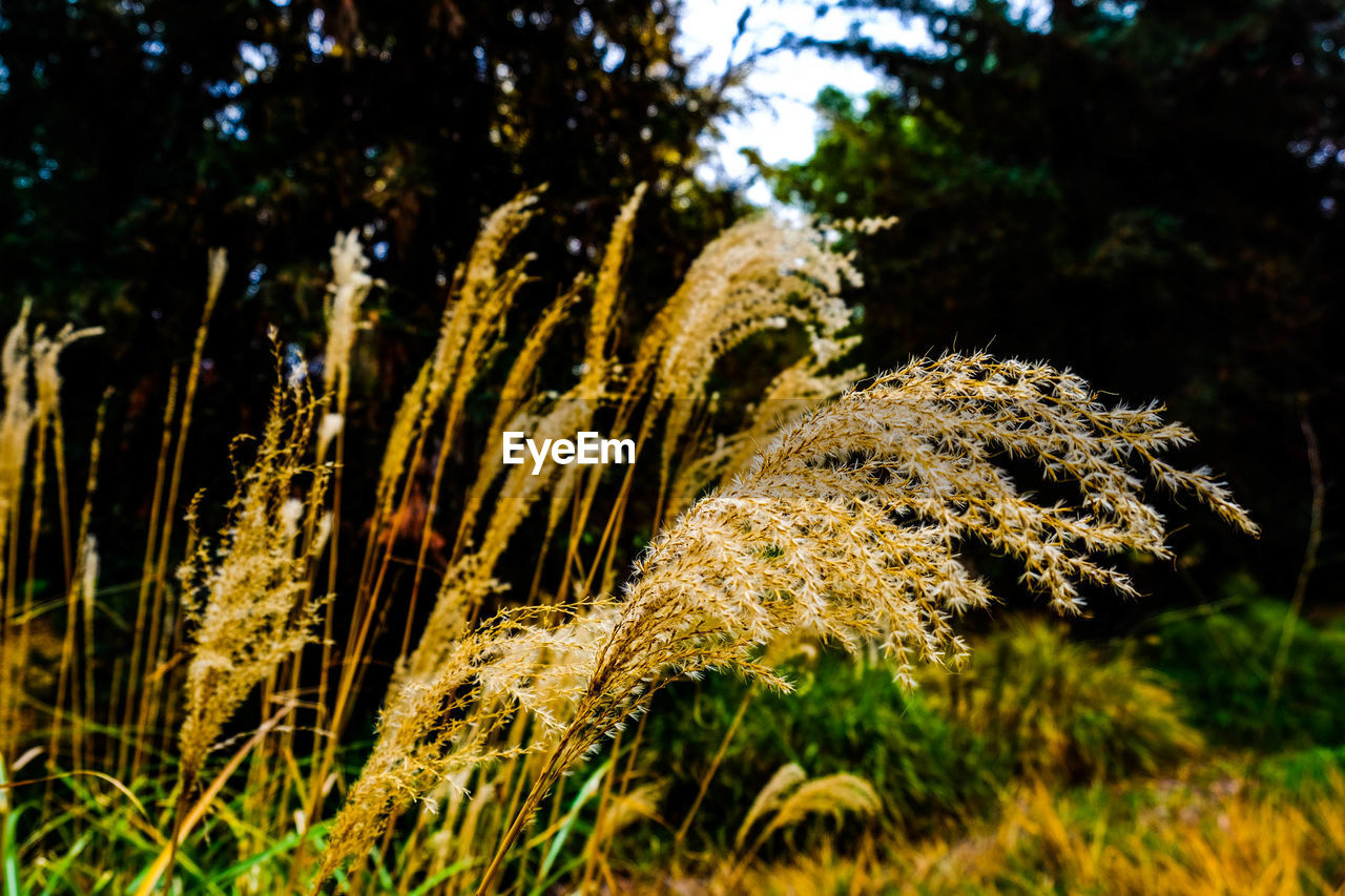 nature, growth, no people, outdoors, close-up, beauty in nature, grass, day, freshness