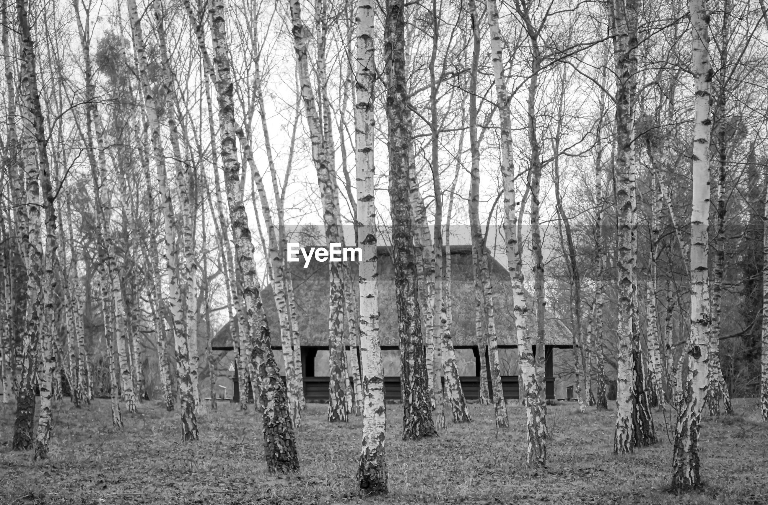 VIEW OF BARE TREES