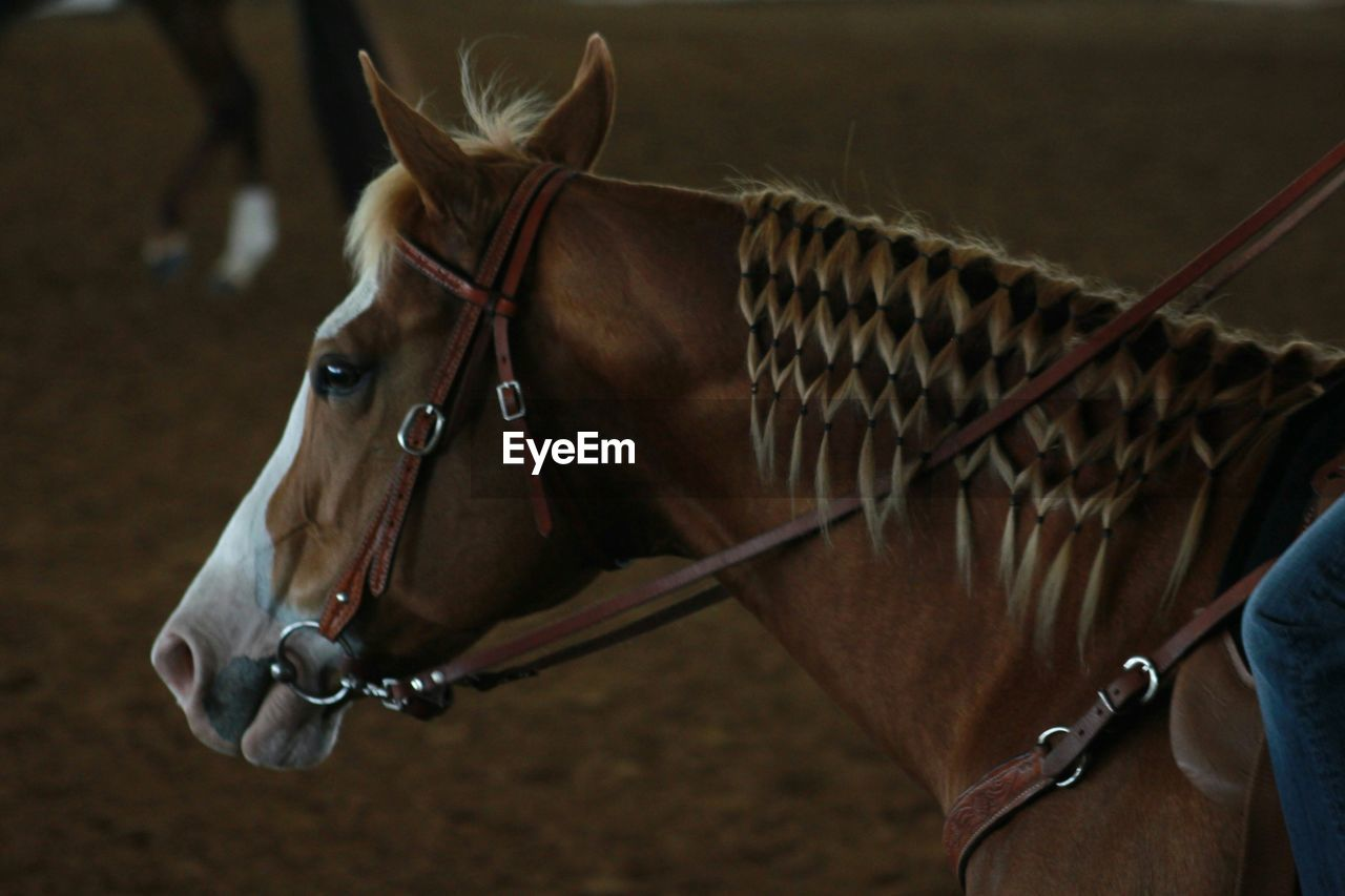 Side View Of Brown Horse
