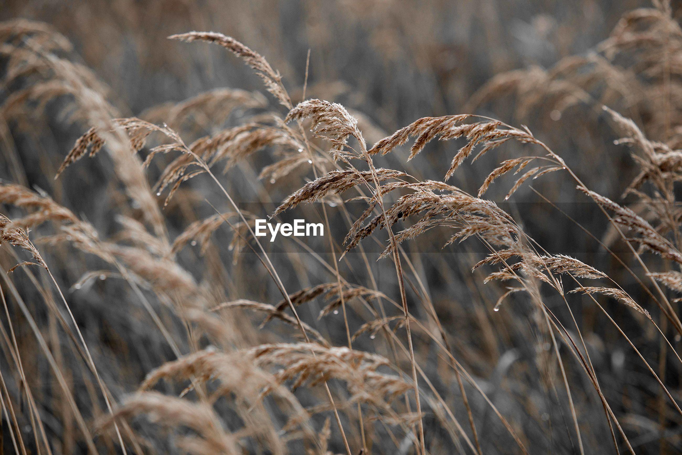 Full frame of grass