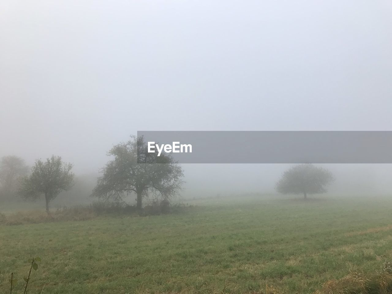 landscape, fog, tranquility, nature, grass, tranquil scene, field, beauty in nature, tree, foggy, scenics, mist, idyllic, hazy, outdoors, day, no people, growth, sky