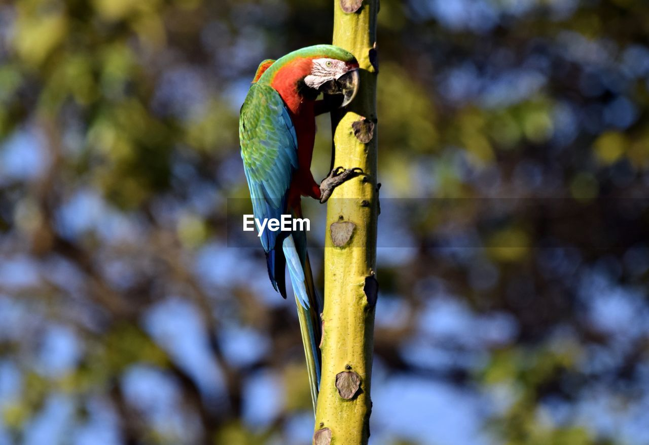 animal themes, vertebrate, animal wildlife, animal, animals in the wild, focus on foreground, one animal, day, no people, bird, perching, nature, close-up, plant, tree, outdoors, branch, beauty in nature, green color, yellow