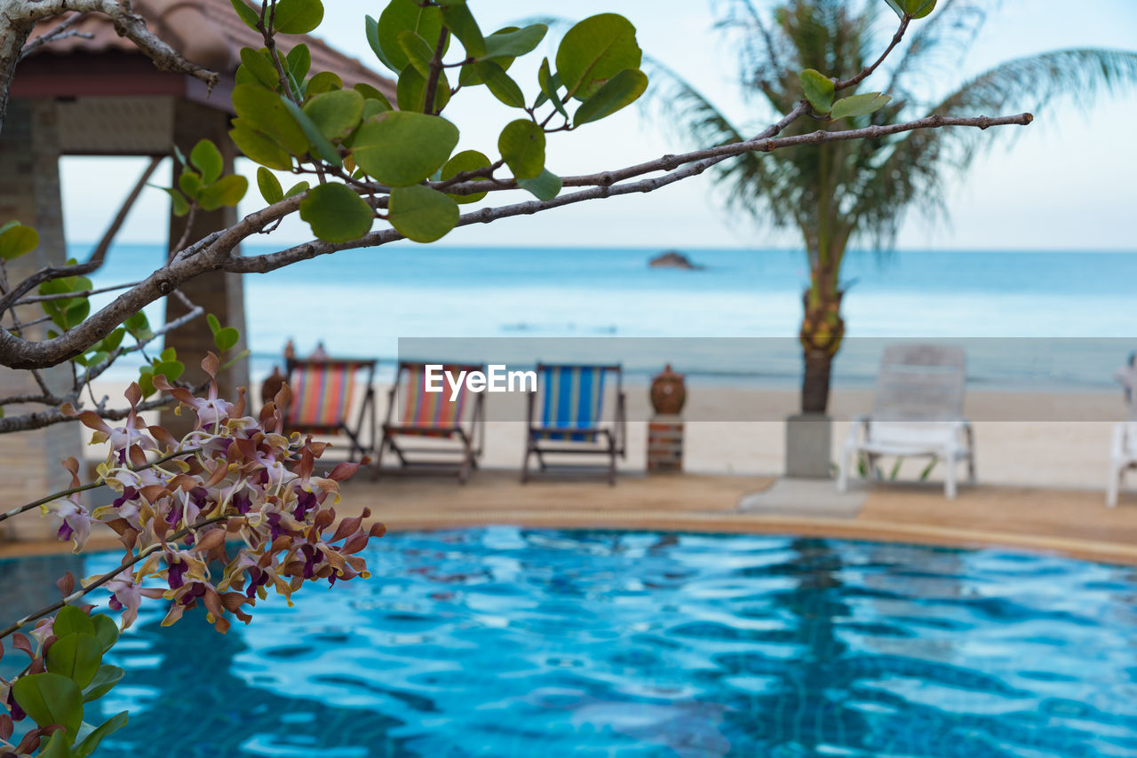 water, swimming pool, sea, pool, plant, nature, tree, beauty in nature, infinity pool, day, horizon, no people, focus on foreground, tranquility, scenics - nature, tranquil scene, beach, chair, tourist resort, horizon over water, outdoors, luxury