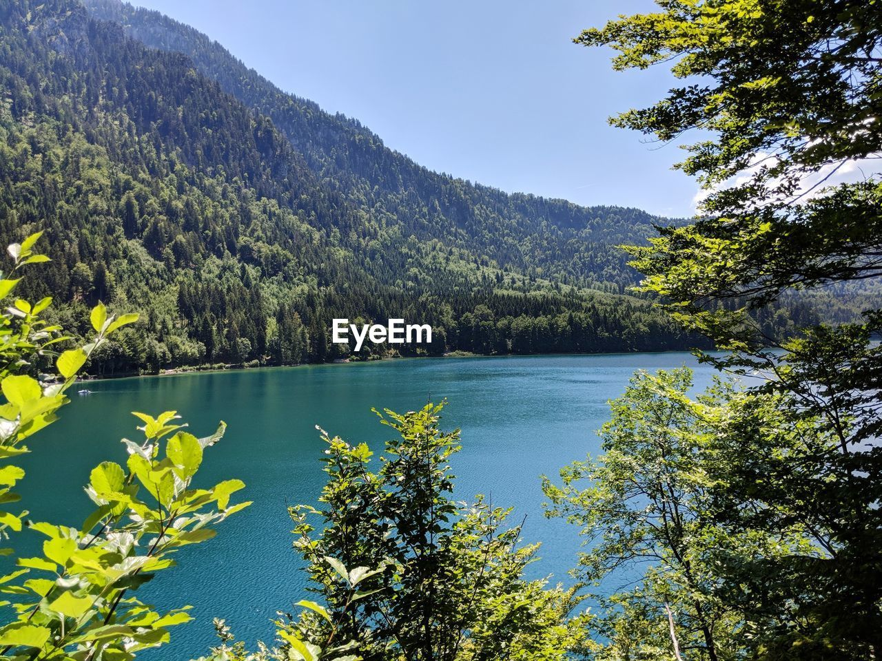 beauty in nature, water, plant, scenics - nature, tranquility, tree, tranquil scene, mountain, lake, growth, nature, sky, day, non-urban scene, no people, idyllic, remote, forest, outdoors, coniferous tree