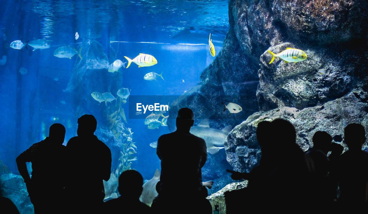 Silhouette people looking at fish in aquarium