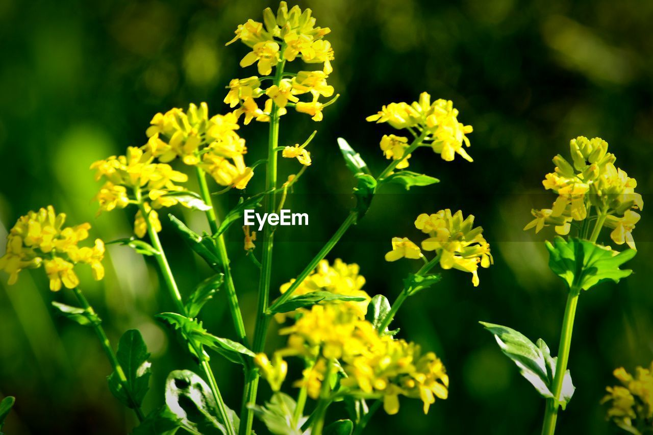 flower, growth, nature, yellow, beauty in nature, plant, fragility, petal, freshness, field, no people, outdoors, day, blooming, green color, sunlight, flower head, close-up