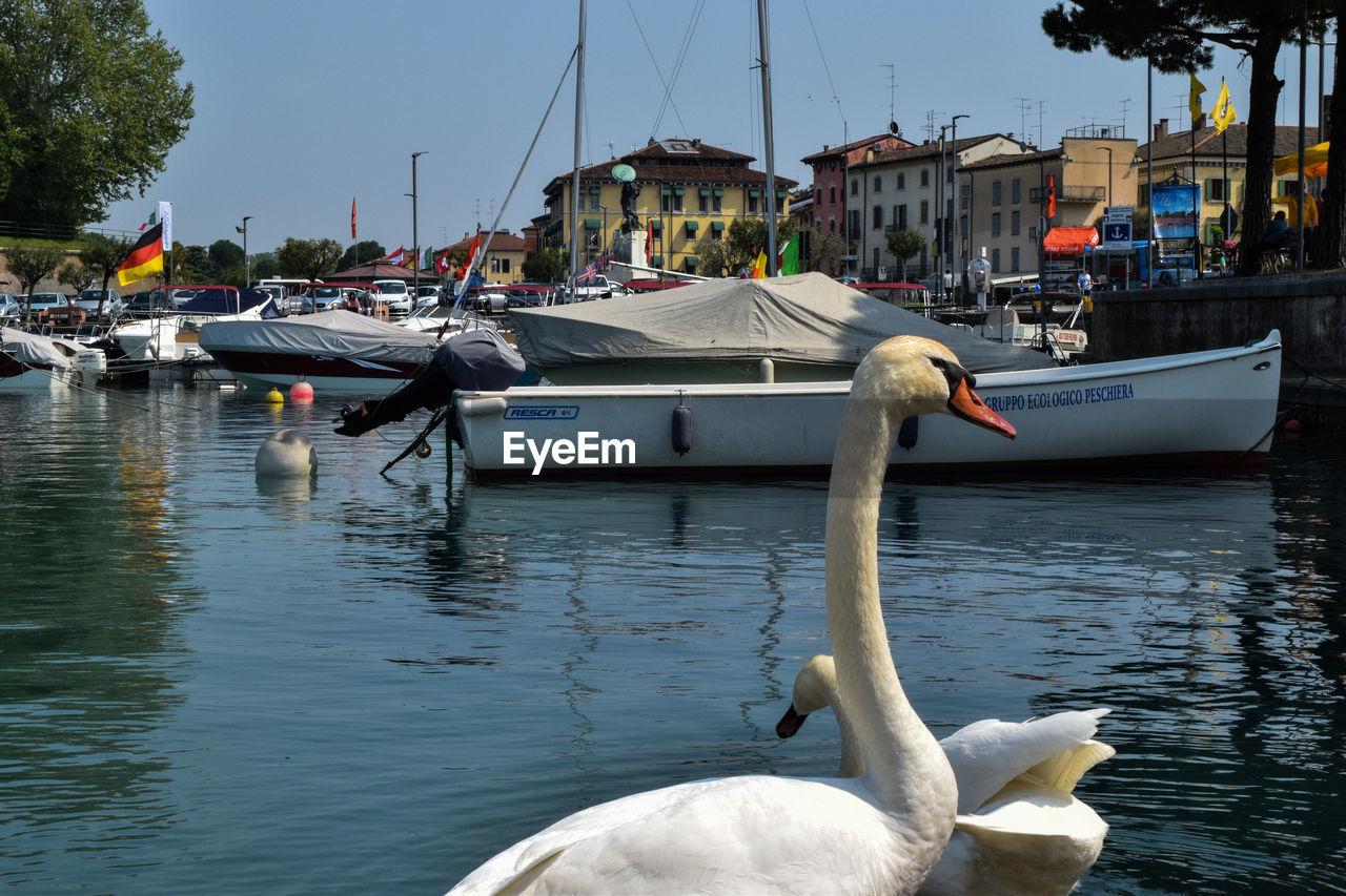 Birds in calm lake