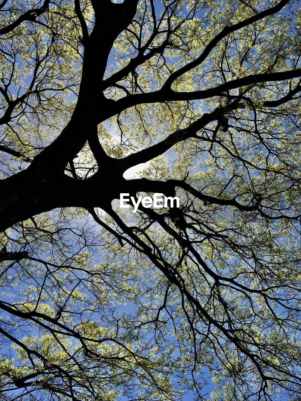 tree, branch, low angle view, nature, beauty in nature, growth, day, no people, outdoors, sky, tranquility, backgrounds, clear sky, freshness