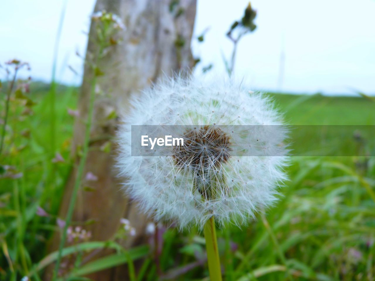 nature, flower, growth, dandelion, fragility, uncultivated, focus on foreground, plant, beauty in nature, close-up, wildflower, field, grass, outdoors, flower head, no people, day, freshness