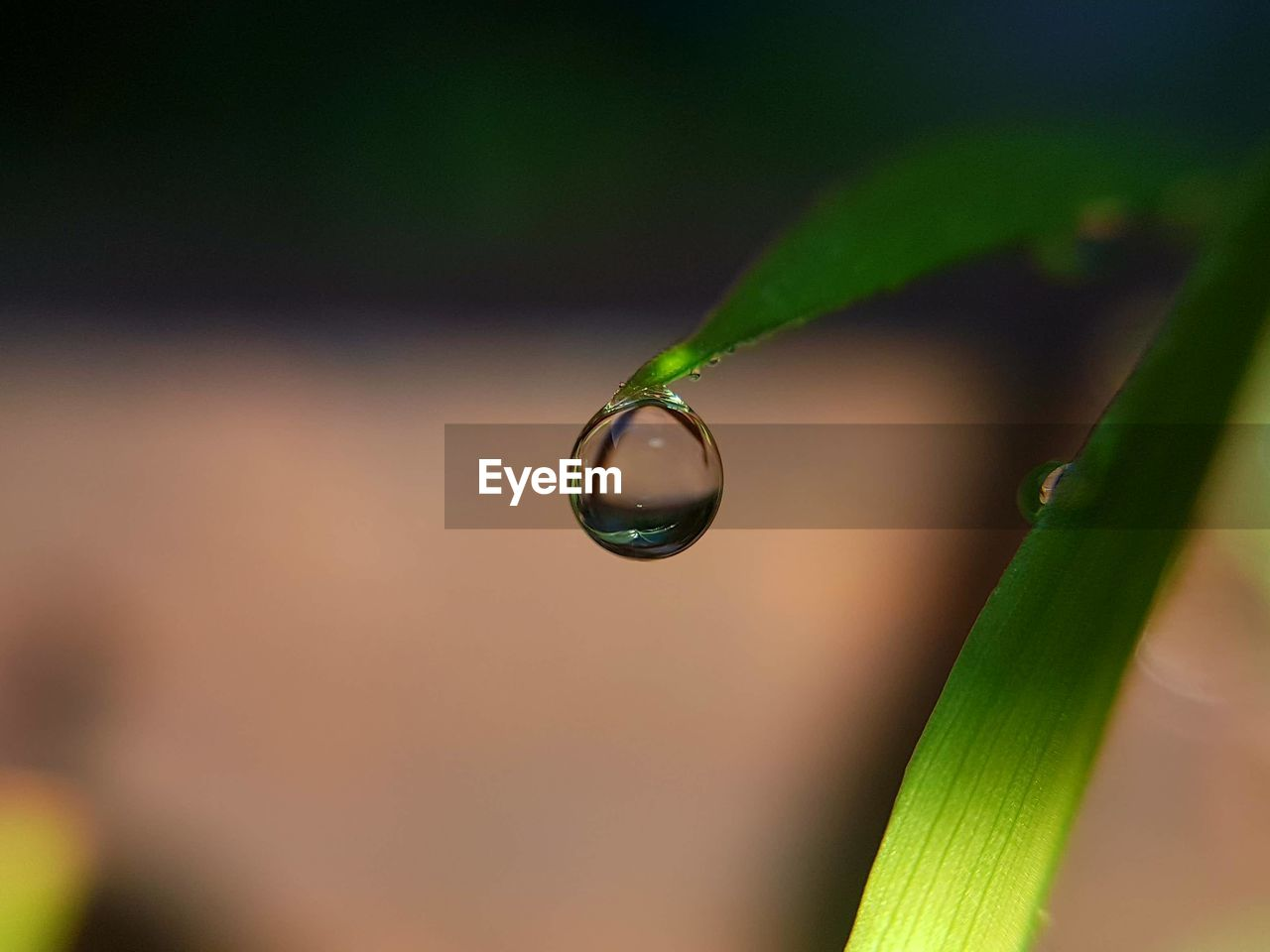 drop, green color, focus on foreground, close-up, nature, growth, water, leaf, plant, day, no people, fragility, freshness, beauty in nature, outdoors