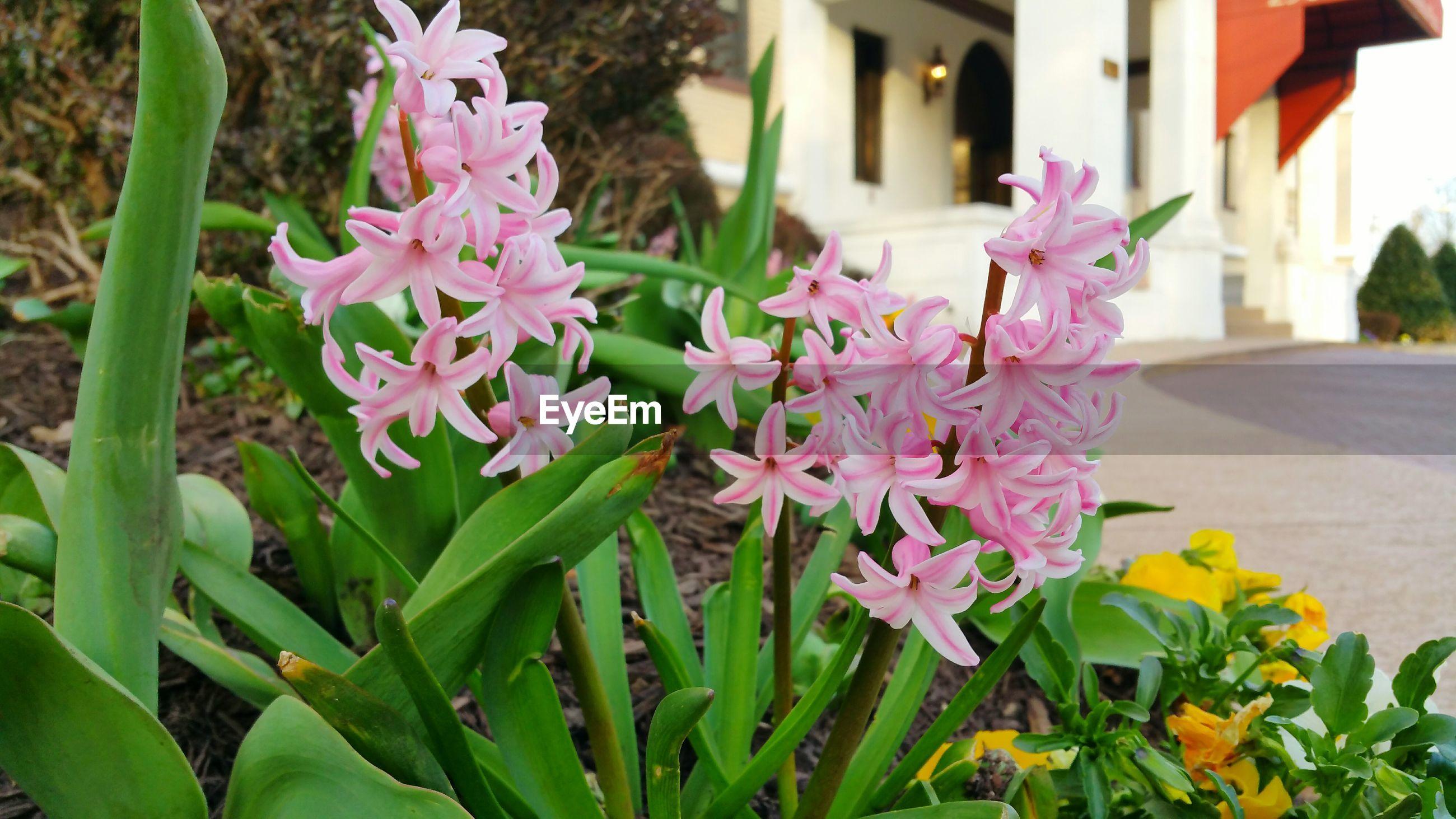 Pink flowers in flowerbed
