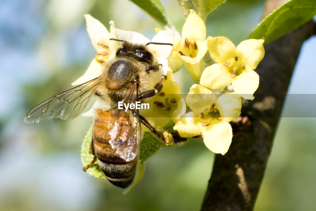 animals in the wild, animal wildlife, insect, animal themes, invertebrate, animal, one animal, plant, flower, beauty in nature, close-up, focus on foreground, flowering plant, growth, bee, fragility, no people, flower head, day, petal, animal wing, pollination, butterfly - insect