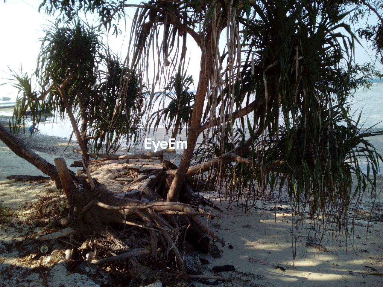 tree, tranquility, nature, tranquil scene, no people, water, outdoors, scenics, beauty in nature, beach, sand, day, sea, landscape, sky