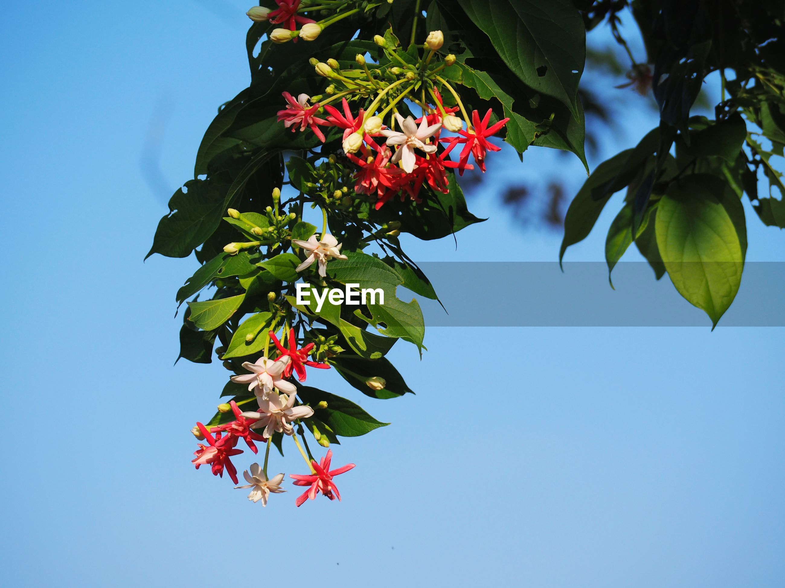 LOW ANGLE VIEW OF FLOWERING PLANT ON TREE AGAINST SKY