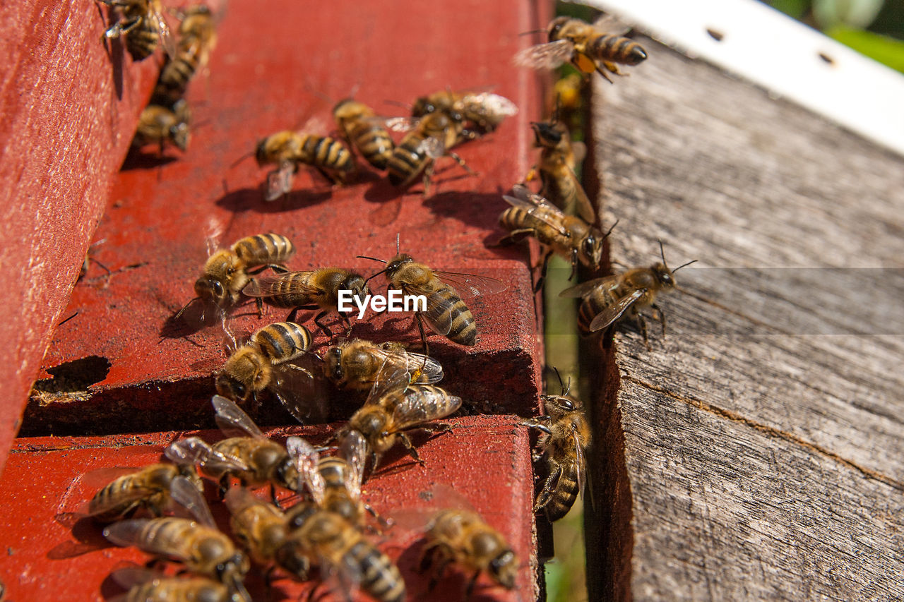 wood - material, close-up, invertebrate, selective focus, table, insect, no people, food, food and drink, animals in the wild, animal themes, nature, bee, apiculture, animal wildlife, outdoors, group of animals, large group of animals, still life, focus on foreground
