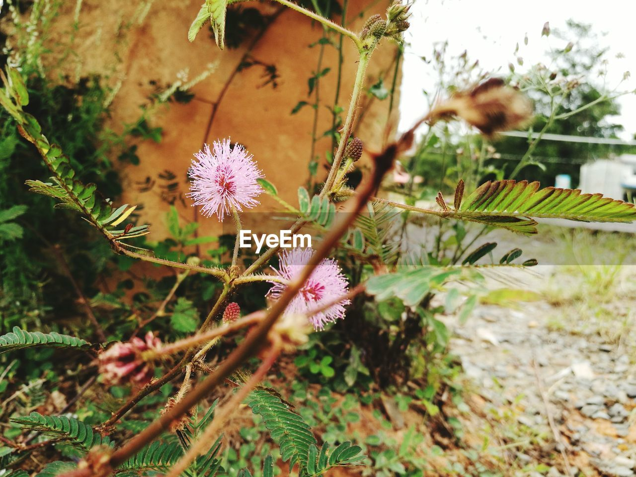 flower, growth, fragility, plant, nature, flower head, day, no people, freshness, beauty in nature, outdoors, close-up