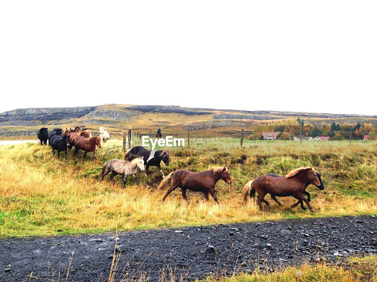 Horses Running On Field
