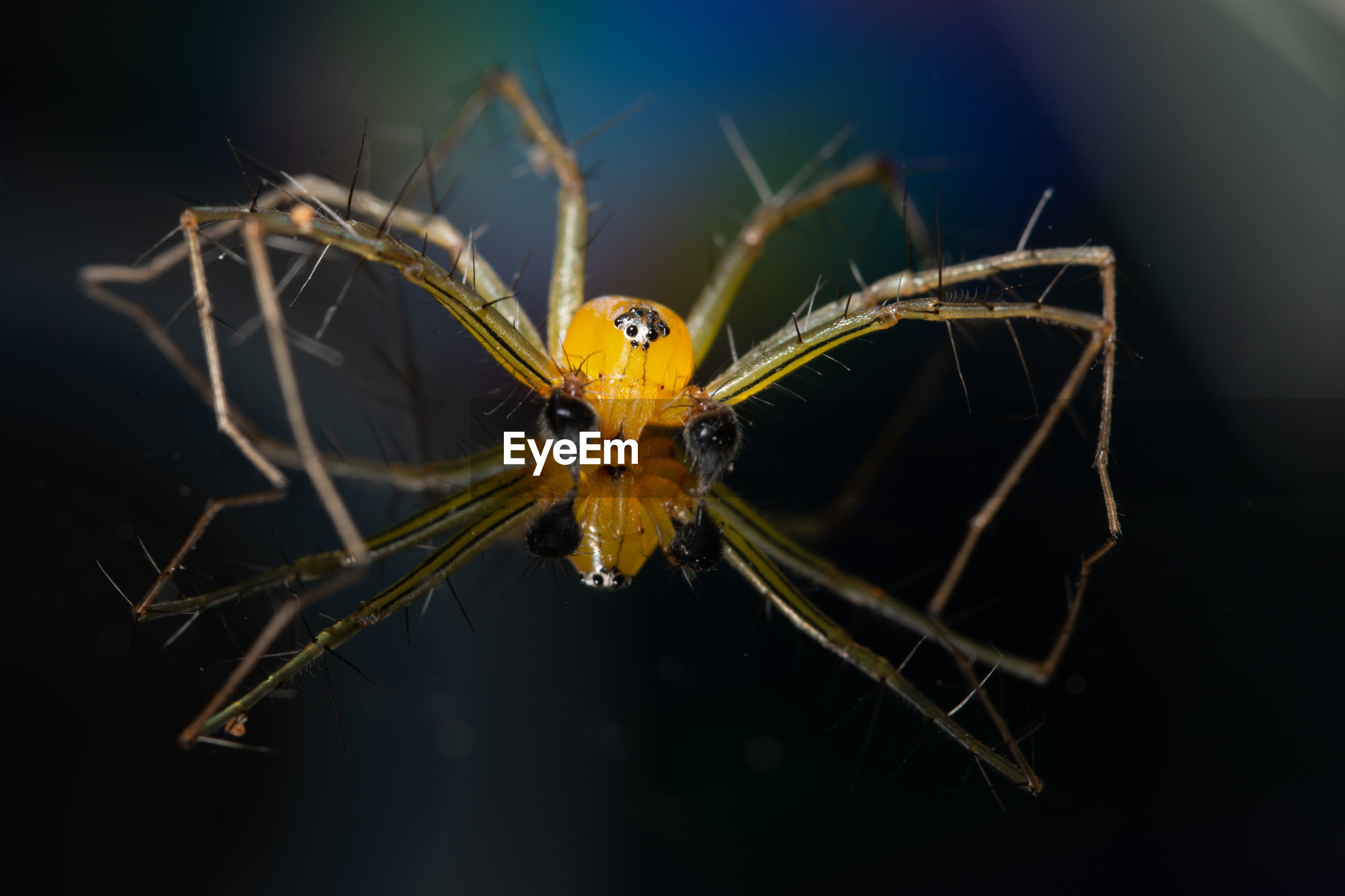 Close-up of spider on surface with reflection