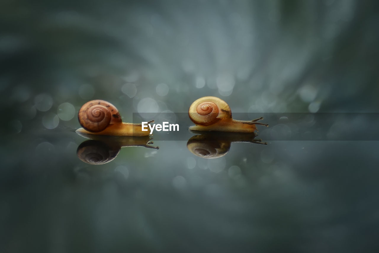 Close-Up Of Snails On Glass