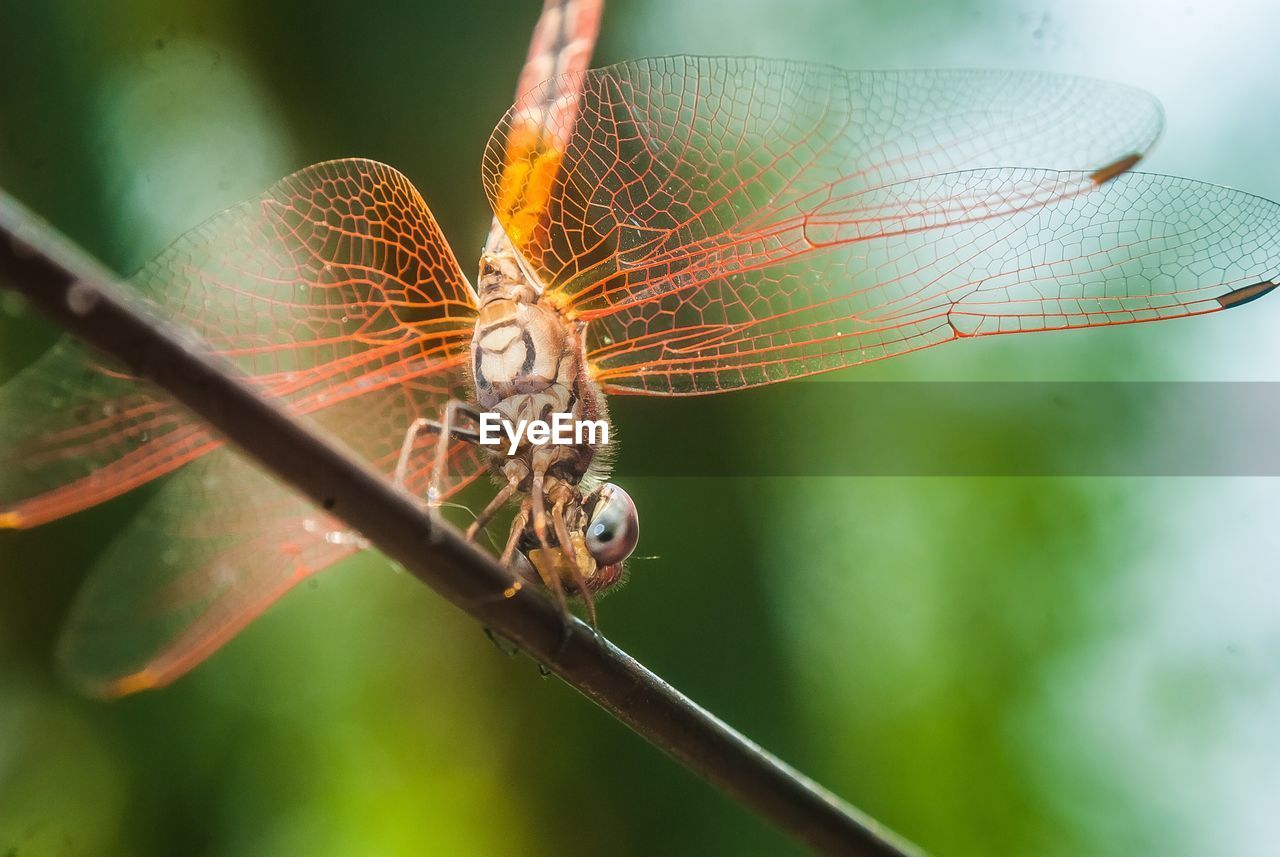 animals in the wild, invertebrate, animal, insect, animal wildlife, animal themes, close-up, focus on foreground, one animal, animal wing, no people, day, nature, plant, selective focus, dragonfly, outdoors, fragility, arthropod, beauty in nature, animal eye