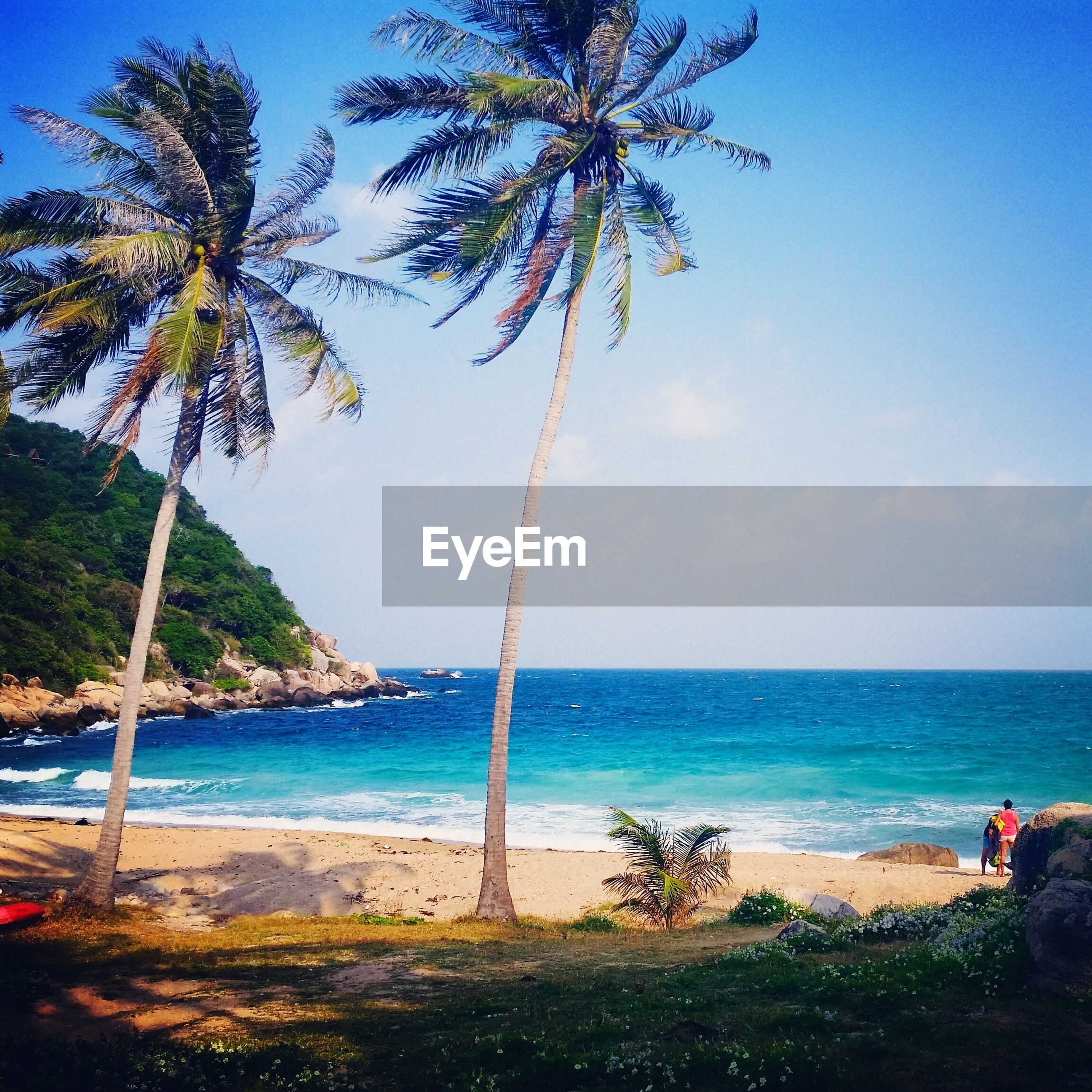 sea, horizon over water, water, beach, shore, tree, palm tree, scenics, tranquility, beauty in nature, tranquil scene, blue, sky, nature, sand, vacations, tree trunk, incidental people, idyllic, growth