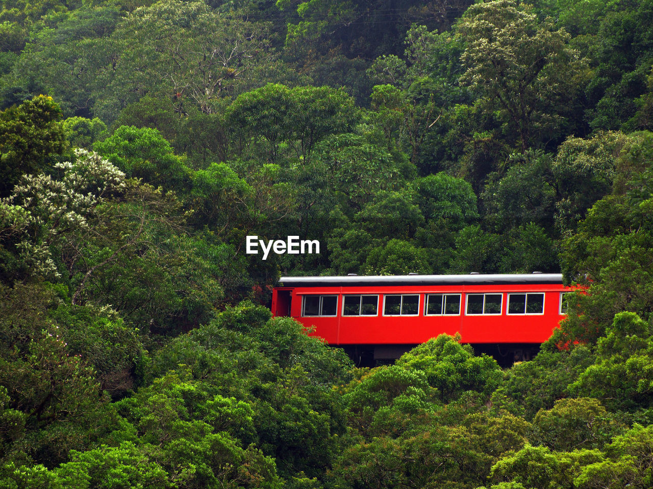 VIEW OF TRAIN ON FOREST