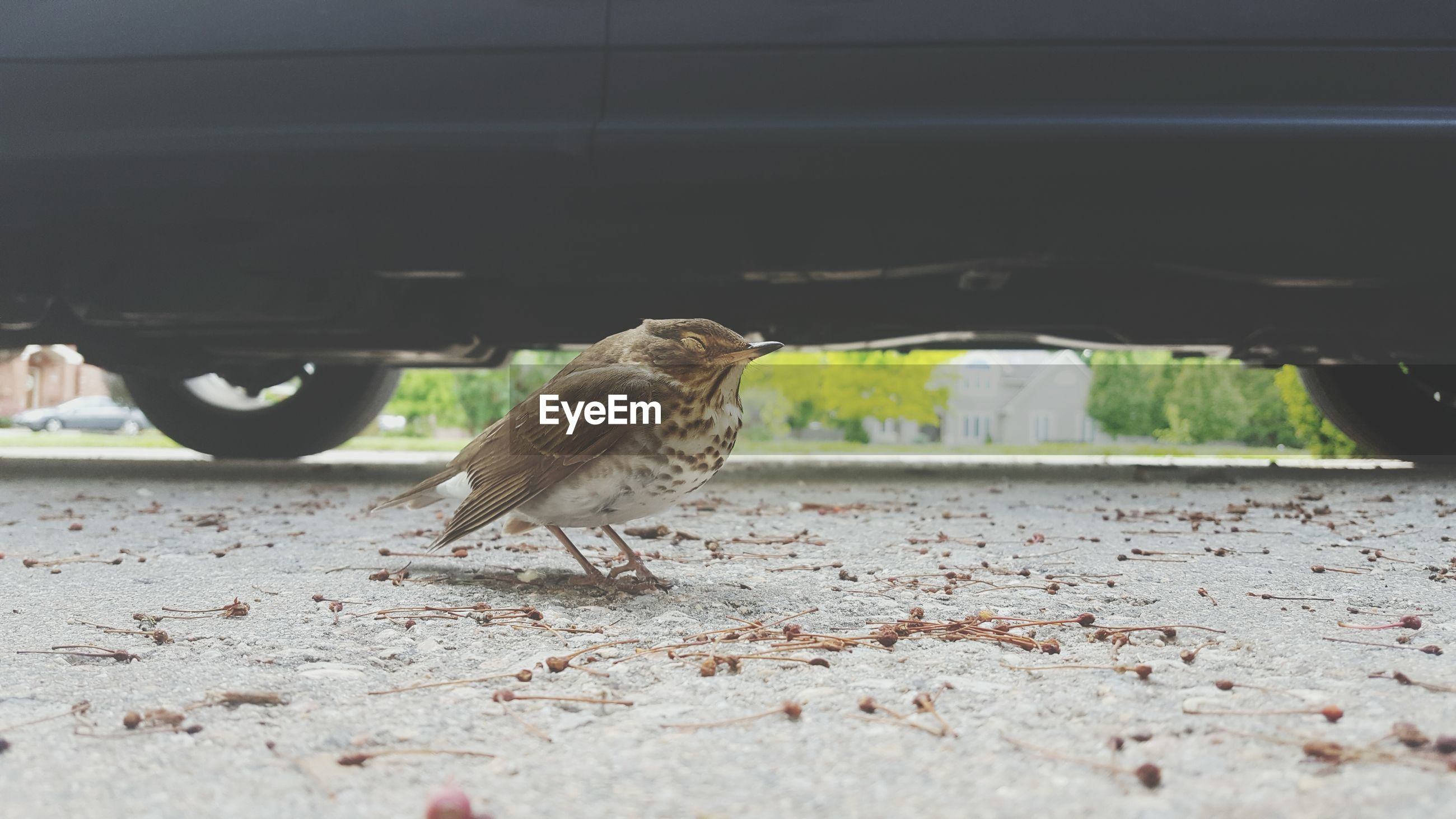 Bird on street against car