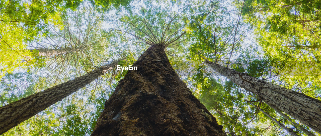 tree, tree trunk, low angle view, nature, forest, branch, no people, day, outdoors, growth, beauty in nature, sky, animal themes