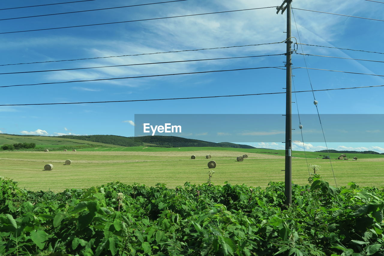 landscape, environment, land, field, plant, sky, agriculture, green color, cable, beauty in nature, nature, tranquil scene, rural scene, tranquility, electricity, day, no people, scenics - nature, power line, grass, outdoors, power supply