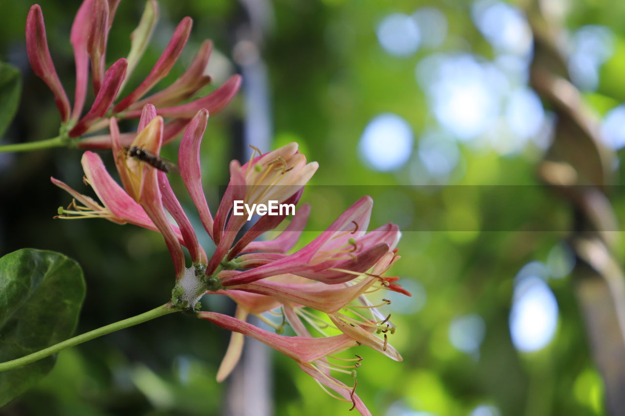 plant, growth, beauty in nature, flower, flowering plant, fragility, vulnerability, close-up, freshness, nature, pink color, focus on foreground, no people, day, petal, inflorescence, outdoors, plant part, selective focus, leaf, flower head, bright, spring
