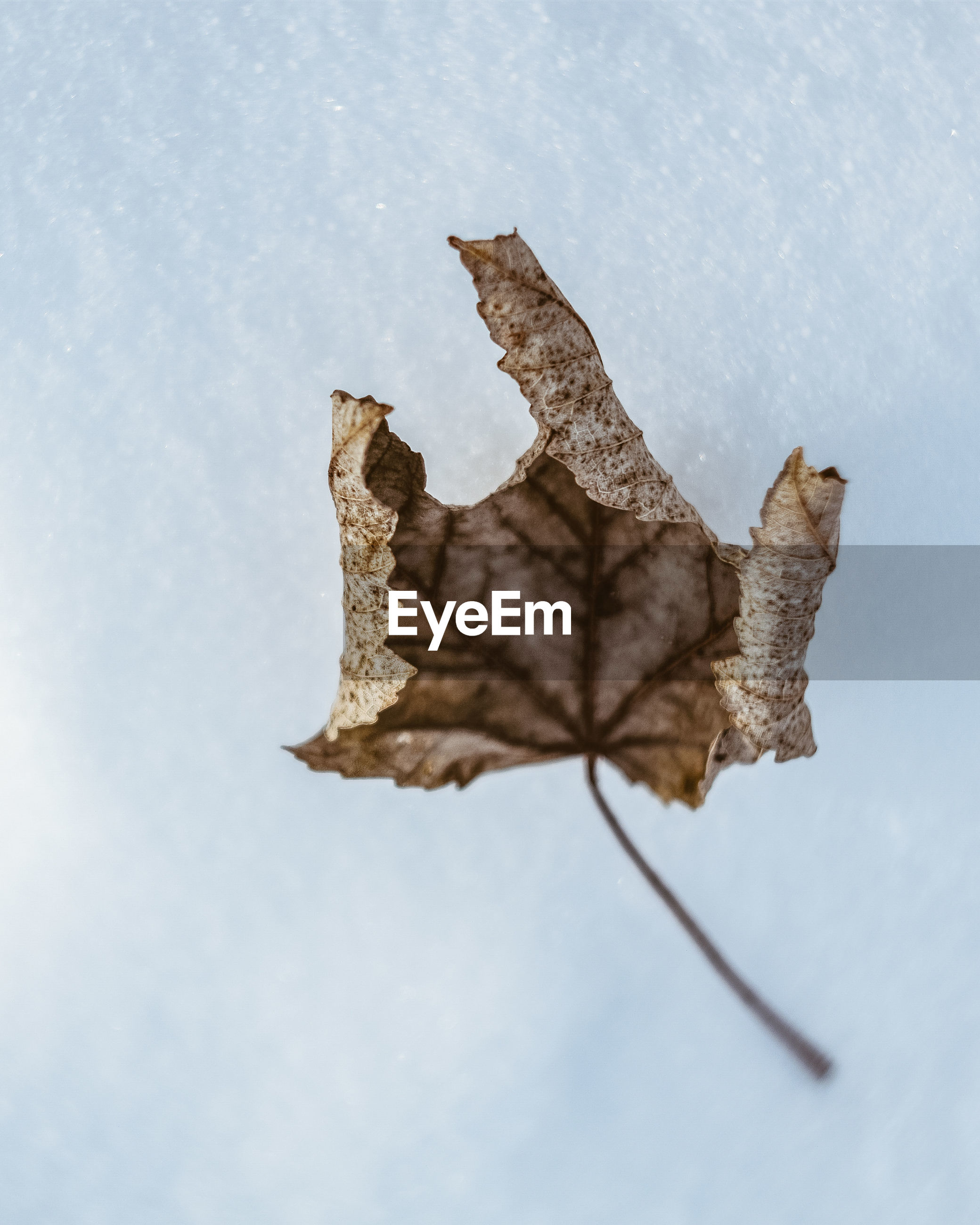 close-up, no people, leaf, nature, dry, plant part, day, vulnerability, fragility, autumn, focus on foreground, change, brown, outdoors, still life, beauty in nature, plant, sky, high angle view, leaves, dried, natural condition