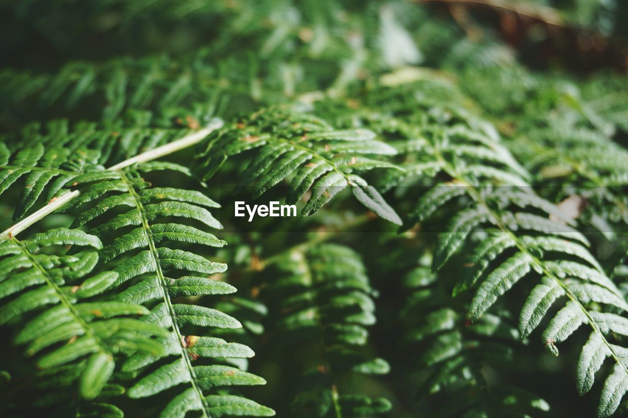 Close-Up Of Fresh Plants