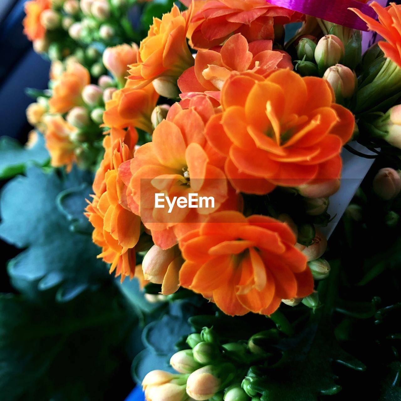 flower, freshness, orange color, beauty in nature, fragility, petal, flower head, nature, no people, growth, plant, day, outdoors, close-up, blooming