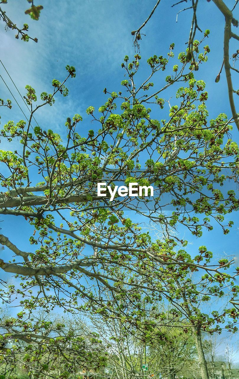 tree, growth, low angle view, nature, branch, beauty in nature, flower, blossom, no people, sky, day, outdoors, springtime, freshness, fragility, backgrounds, clear sky