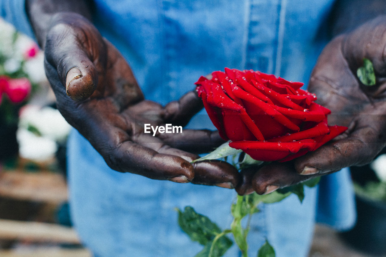 Midsection Of Florist Holding Red Rose