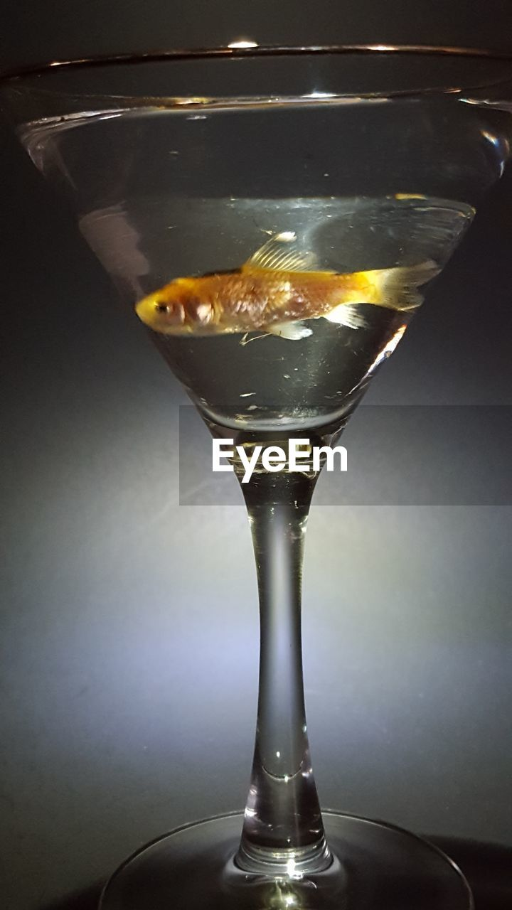 Close-Up Of Fish In Martini Glass