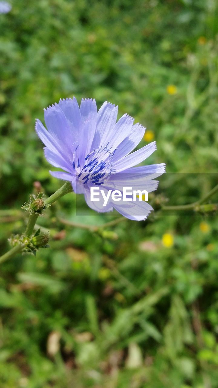 flower, nature, growth, blooming, plant, purple, beauty in nature, spring, petal, fragility, no people, flower head, outdoors, freshness, close-up, day