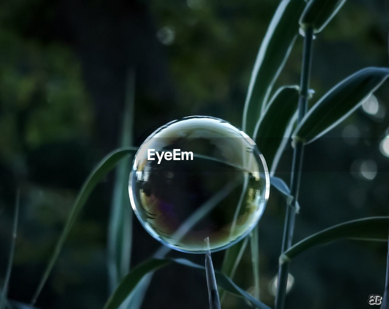 bubble, focus on foreground, growth, fragility, plant, nature, day, close-up, no people, bubble wand, outdoors, grass, beauty in nature