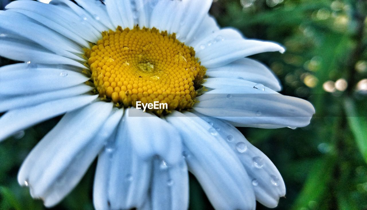 flower, petal, fragility, beauty in nature, nature, freshness, growth, flower head, blooming, plant, outdoors, yellow, pollen, no people, close-up, day