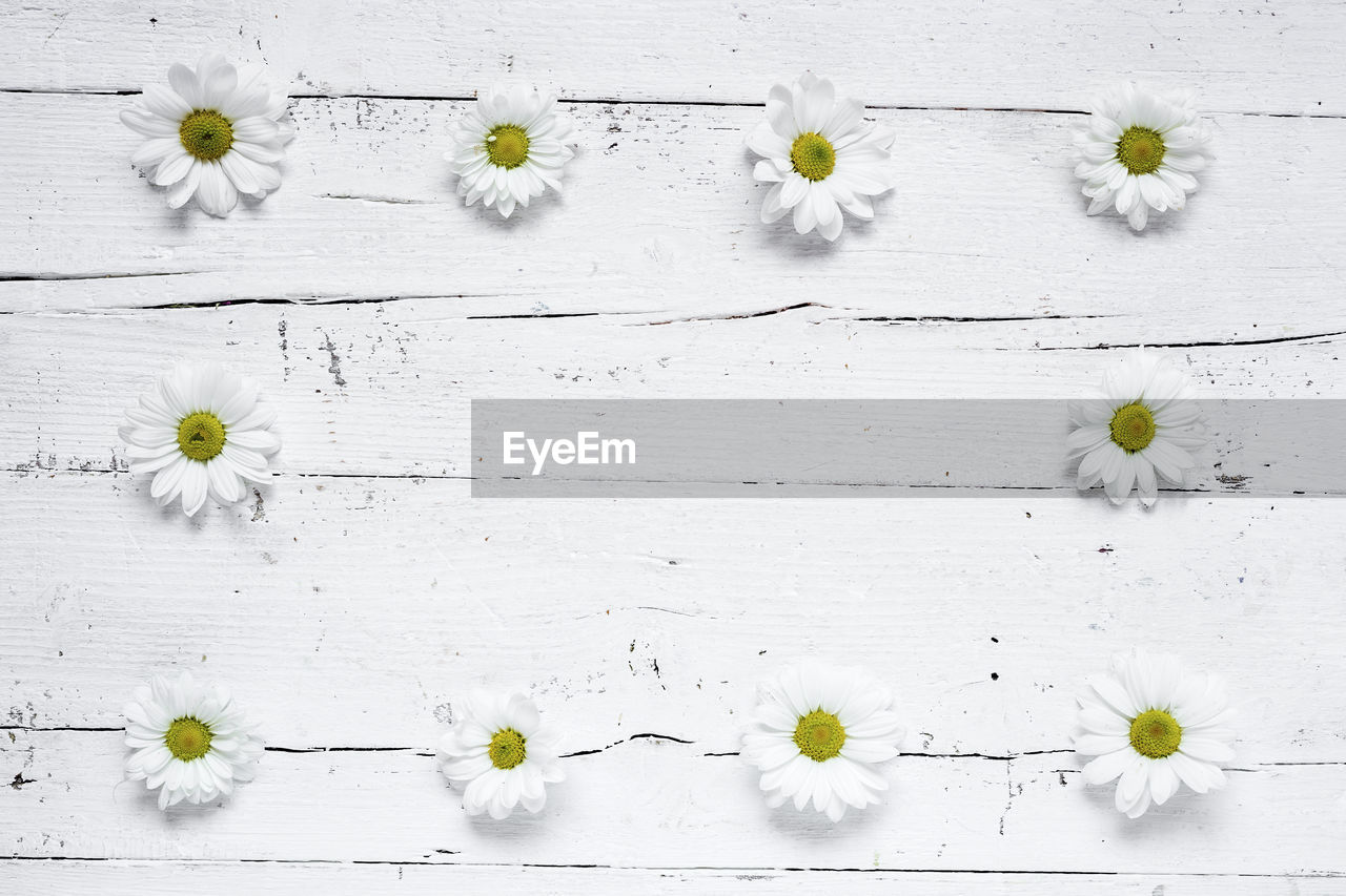 freshness, flower, flowering plant, plant, white color, nature, vulnerability, fragility, indoors, no people, beauty in nature, flower head, petal, growth, close-up, directly above, arrangement, inflorescence, daisy, wood - material