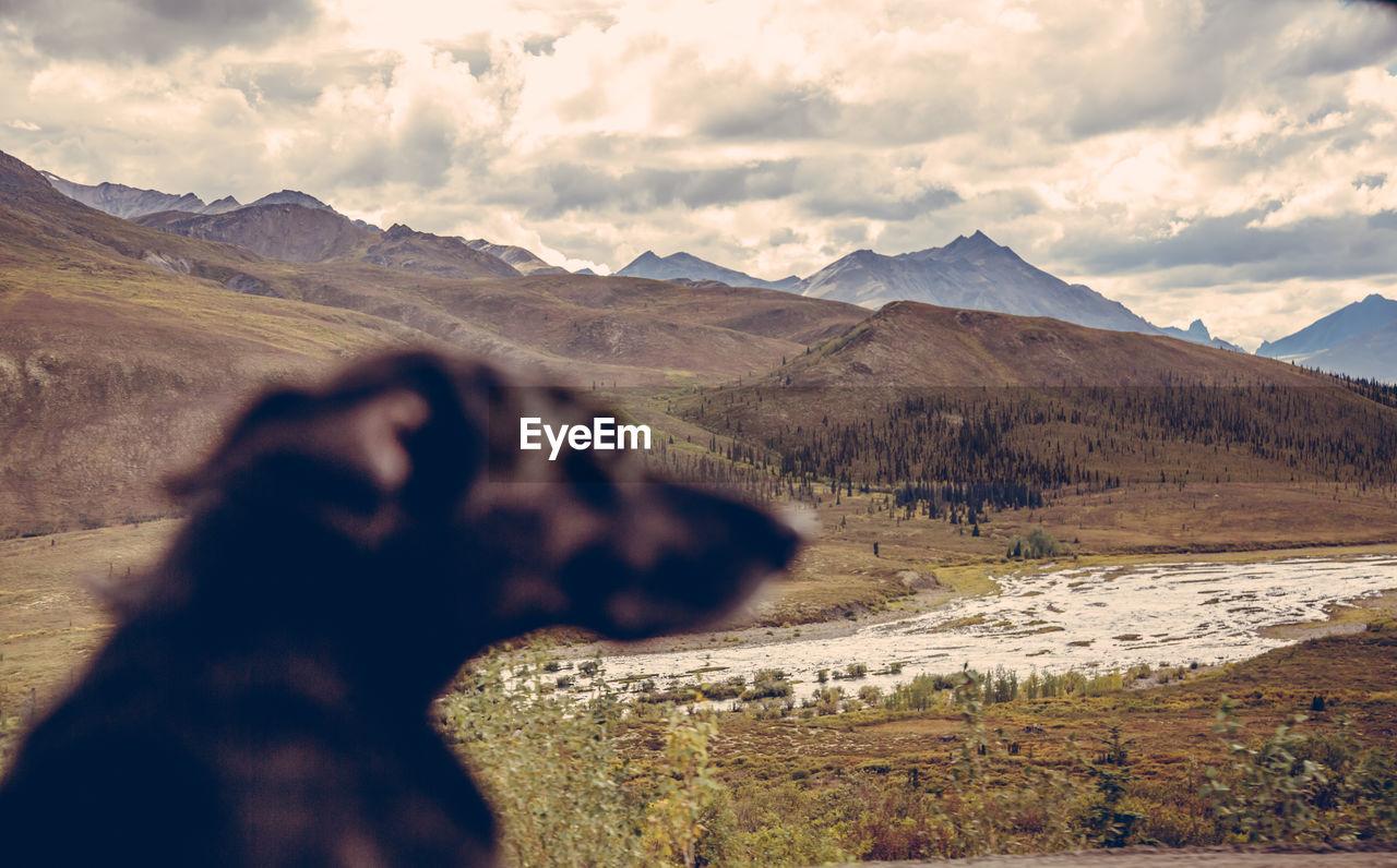 Blurred Profile Of Dog In Landscape