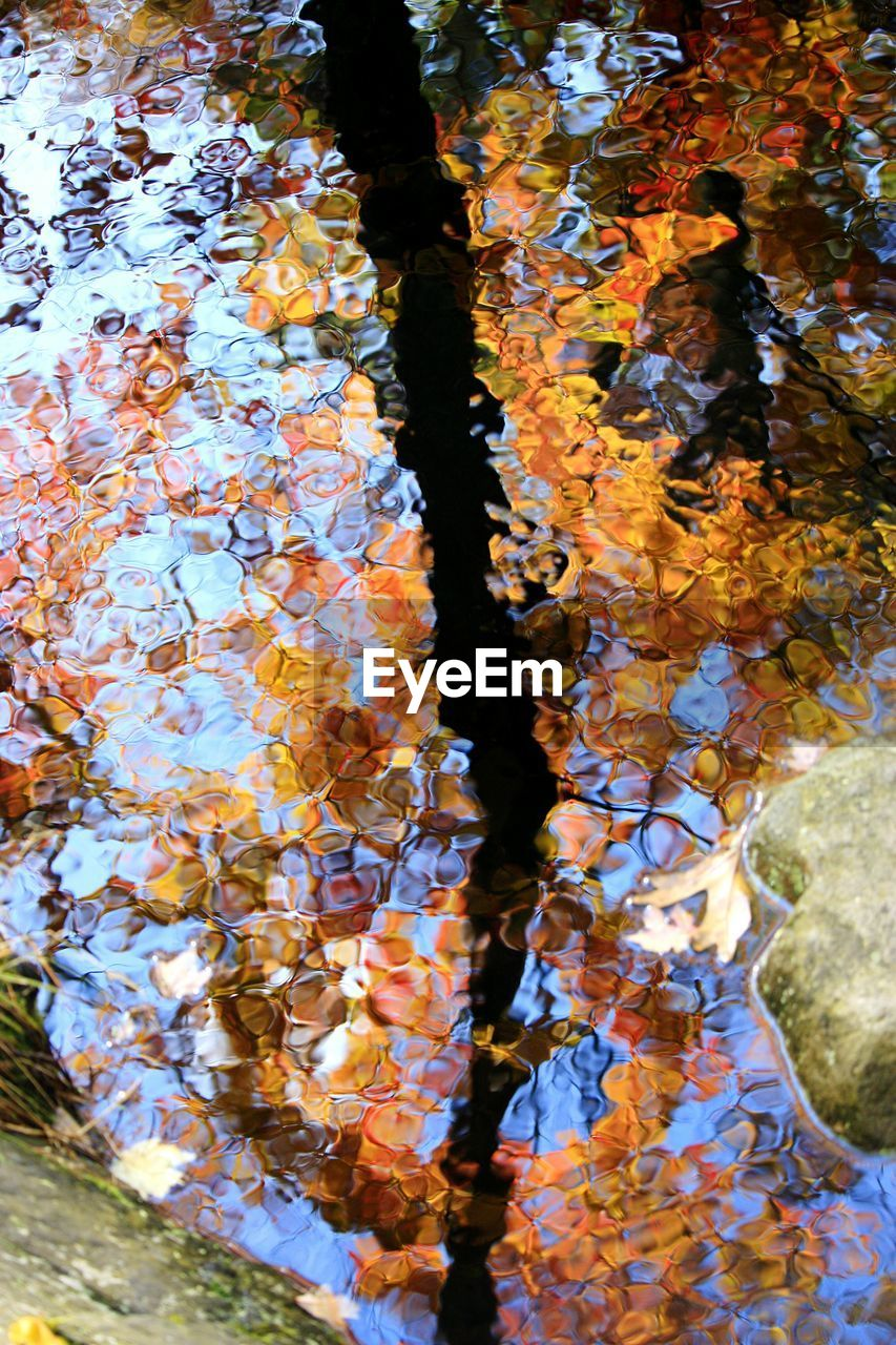 tree, water, autumn, nature, day, change, leaf, plant part, no people, plant, close-up, outdoors, lake, high angle view, beauty in nature, full frame, reflection, branch, floating, leaves, floating on water