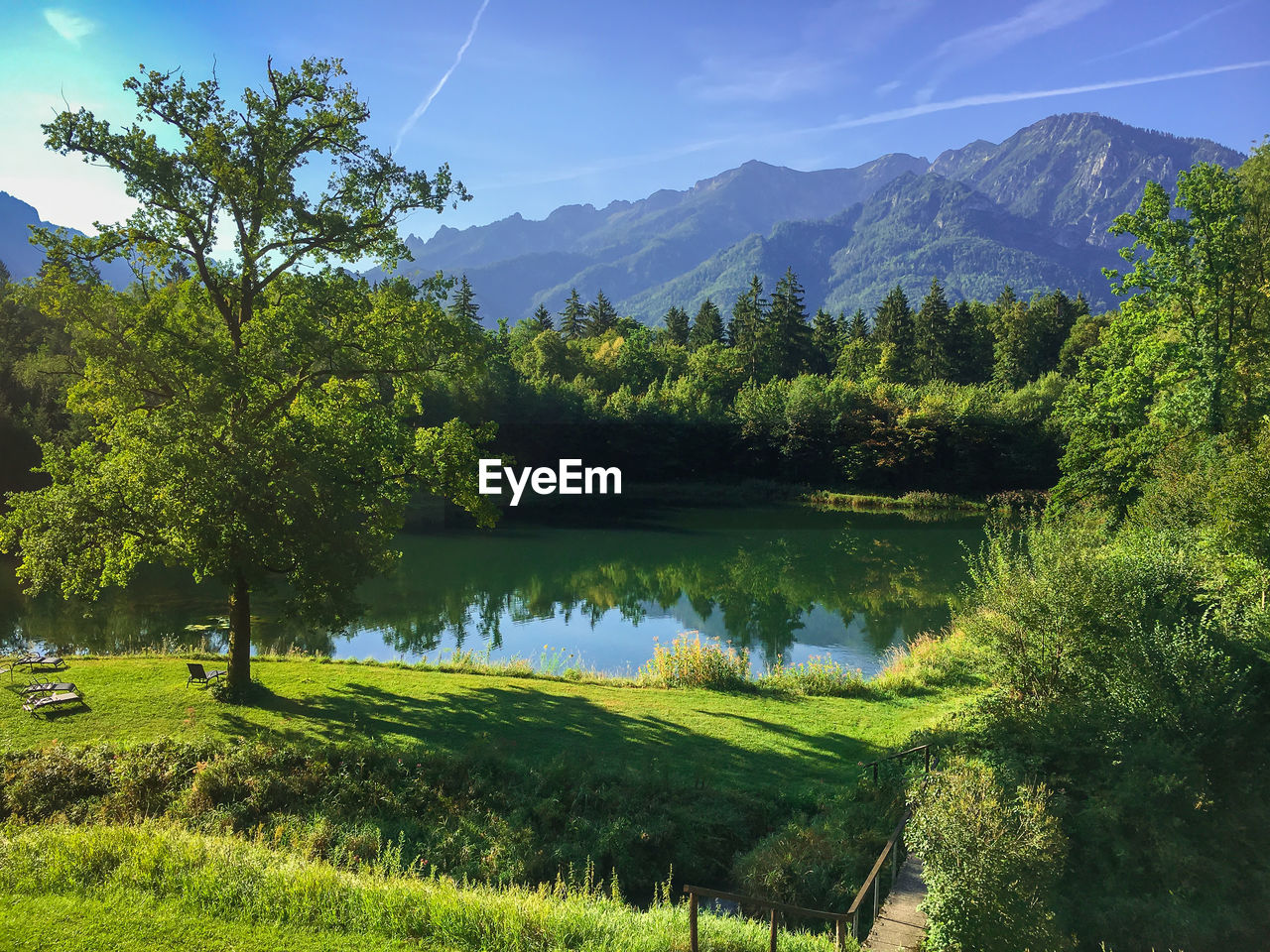 tree, plant, tranquility, tranquil scene, scenics - nature, beauty in nature, water, lake, green color, reflection, mountain, non-urban scene, nature, landscape, sky, environment, growth, day, grass, no people, outdoors